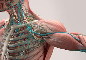 解剖学・生理学