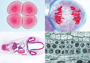 発生・遺伝・細胞