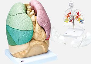 肺・呼吸器