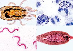 寄生虫・病原菌