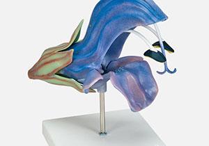 植物標本・模型