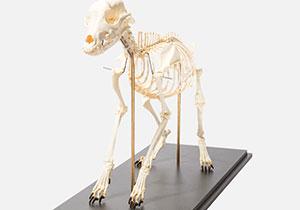 全身骨格標本