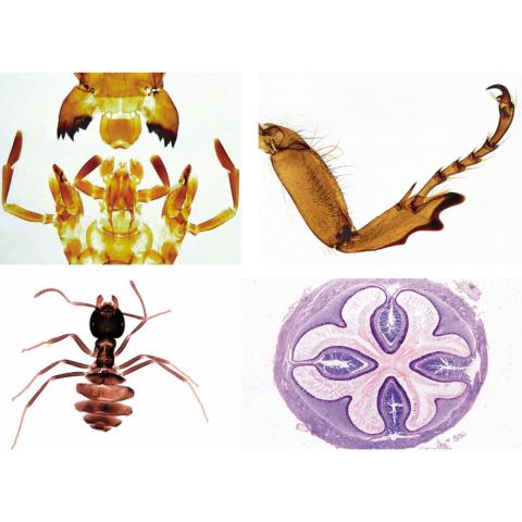 昆虫〜補充セット,英語版