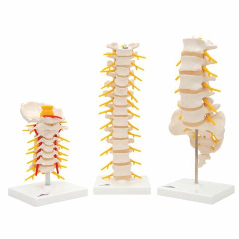 脊椎セット(A72, A73, A74)