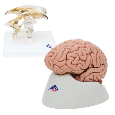 脳セット(C18, VH410)