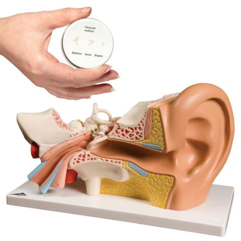 平衡聴覚器セット(E10, E13)