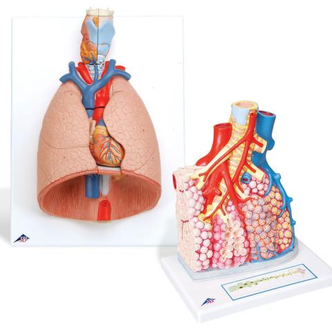 呼吸器セット(G15, G60)