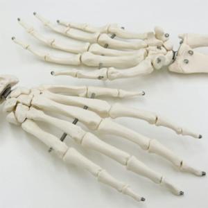 指骨に至るまで個々に造形