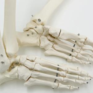 末節骨に至るまで個々に造型し,足底のアーチまでも忠実に再現