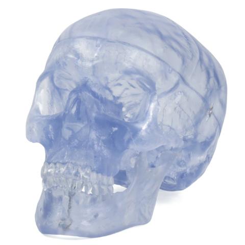 頭蓋透明モデル
