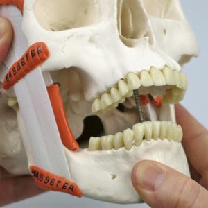 咀嚼筋は平ゴム接続,開口できます