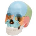頭蓋骨22分解キット,マルチカラー仕様