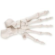 足の骨モデル,ナイロン糸つなぎ