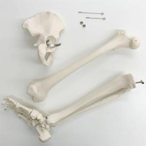 膝関節・股関節で分解できます