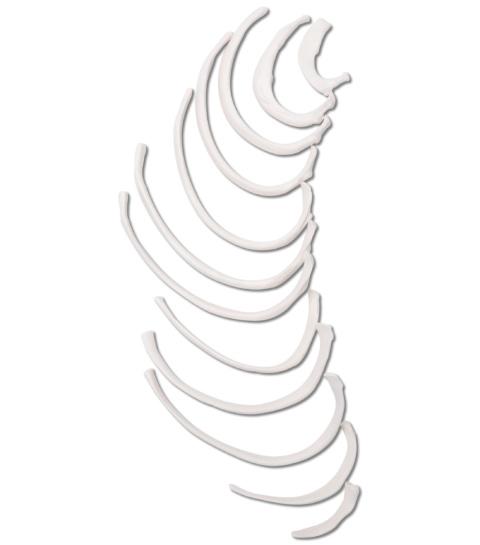 肋骨モデル (片側12本)