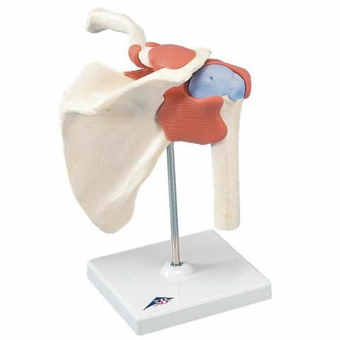 肩関節,機能デラックスモデル