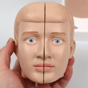頭部:正面