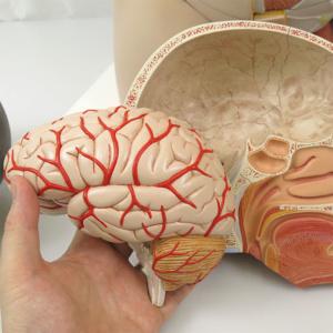 左半脳は取り外せます
