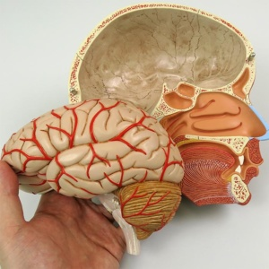 左脳は取り外せます