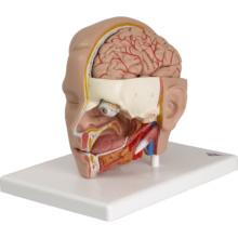 頭部,6分解デラックスモデル,台付