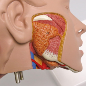 顎の一部分を開放