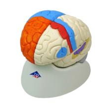 脳,8分解神経学モデル