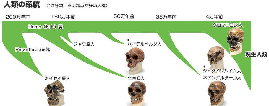 人類の系統と年代