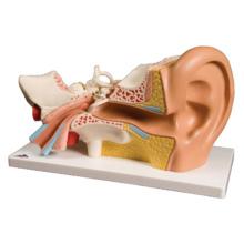 平衡聴覚器,3倍大・4分解モデル,標準型