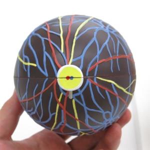 眼球血管膜:背面