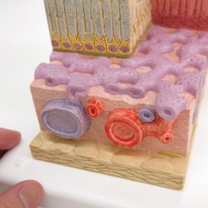 強膜の一部と脈絡膜