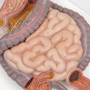大腸・小腸