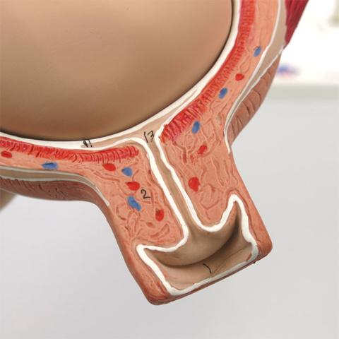 膣・子宮頸部