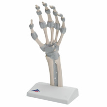 手関節,靭帯付機能モデル