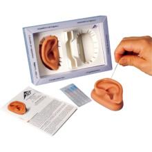 耳鍼モデル