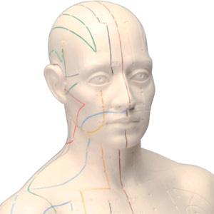 頭部の拡大像