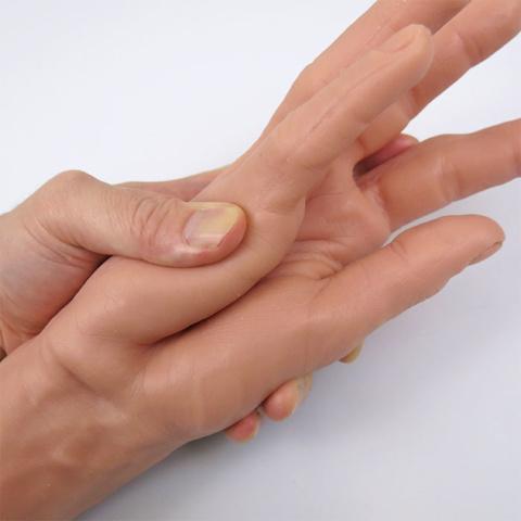 手全体に柔軟性があります