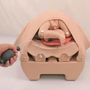 膨張式の子宮インサート取り付けてレオポルド触診法を練習できます。