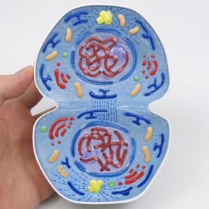 細胞質分裂