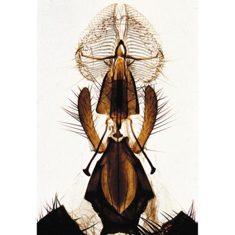 昆虫類〜初級用ラージセット,英語版