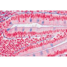 セットNo.1〜細胞・組織と器官,英語版