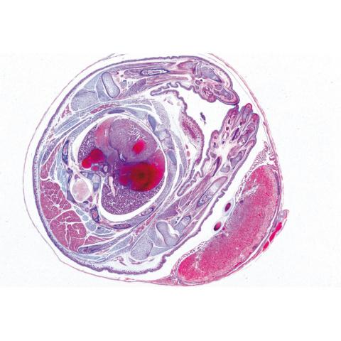 セットNo.5〜遺伝・生殖・発生,英語版