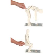 腰痛指導教育用モデル「正しい荷の持ち上げ方」