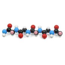 ポリペプチド分子模型組立キット