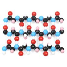 βシート構造タンパク質分子模型組立キット
