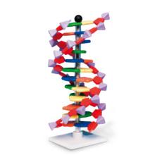 アドバンスド・DNA模型組立キット・12層(miniDNA™)