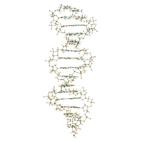 吊下げ型DNA分子模型組立キット