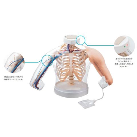 上腕部筋肉注射説明模型