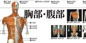 「下肢帯・大腿の筋」の部分の拡大画像