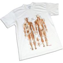 筋肉チャートTシャツ,Sサイズ