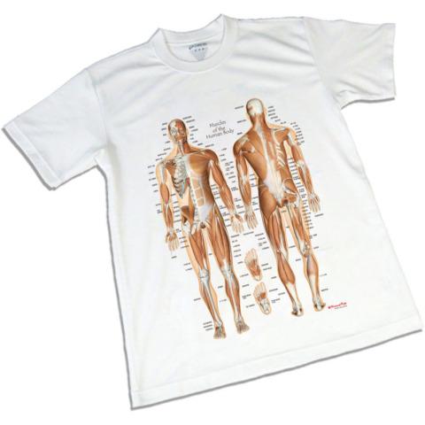 筋肉チャートTシャツ